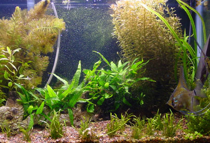 THE EVOLUTION OF A PLANTED TANK